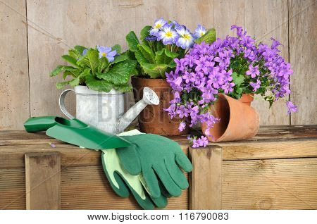 Flowers And Gardening Accessories