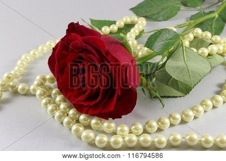 Red rose and pearls on white background