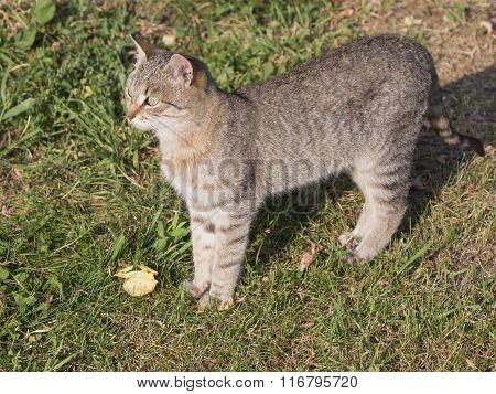 Beautiful Smart Gray-brown Cat