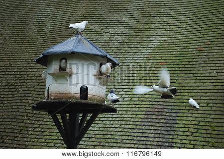 Bird house with pigeons