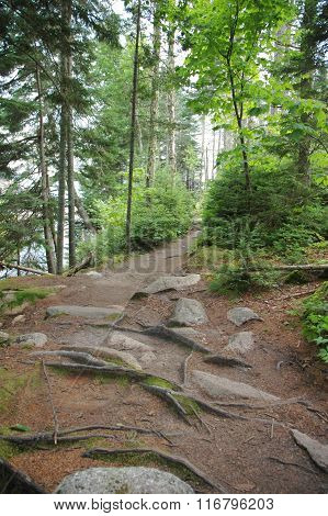 Mountain trail in Acadia National Park