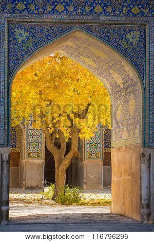 Beautiful tree with yellow leaves framed in arch of Shah Mosque in Esfahan, Iran