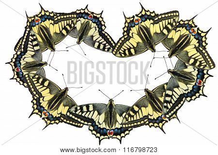 Butterflies on a white background - photo 3