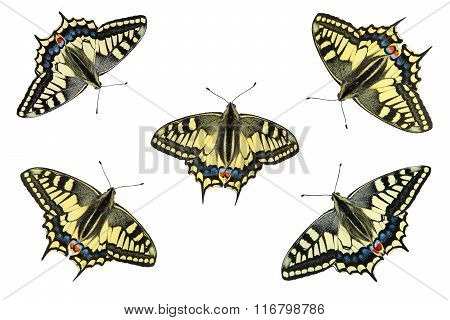 Butterflies on a white background - photo 4