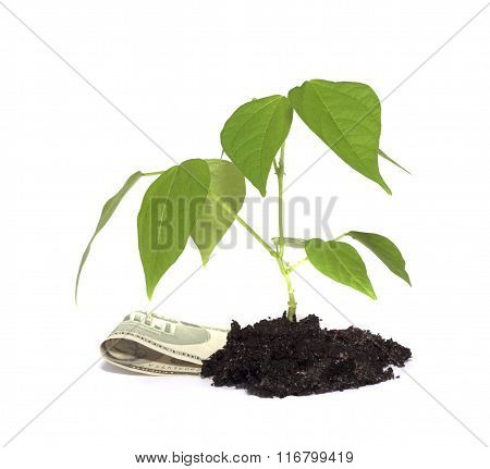 string beans and denominations on a white background