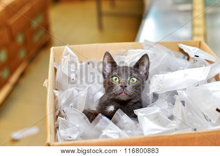 Homeless Cat Sitting In A Cardboard Box Including Plastic Packaging In Stock