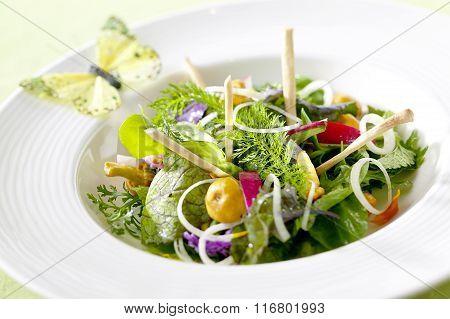 Mixed Leaf Lettuce