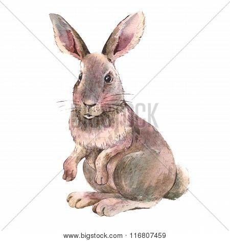 Watercolor Easter Bunny Isolated On White Background