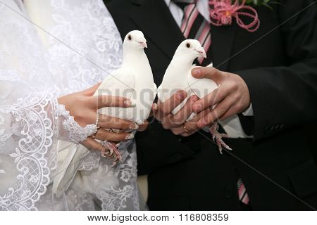 Two White Dove In The Hands Of Newlyweds Close Up