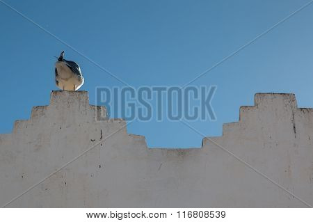 Seagull On The Edge Of A Wall