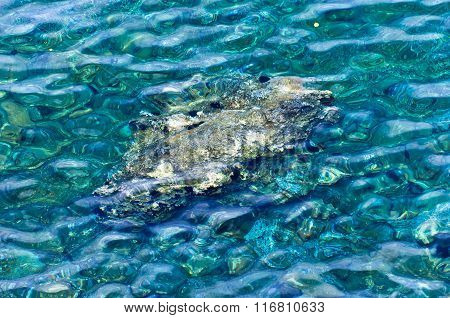Rocky sea floor visible thru crystal clear turqoise water of Aegean sea