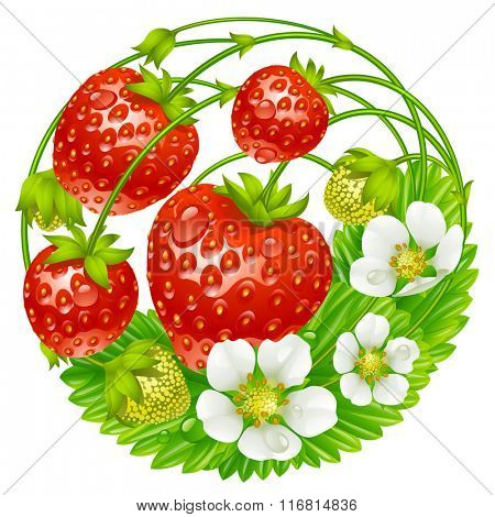 Vector strawberry round composition isolated on white background