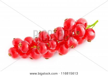 Sprig of red currant.
