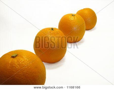 Row Of Oranges 2
