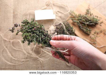 Bunch Of Thyme In Female Hand