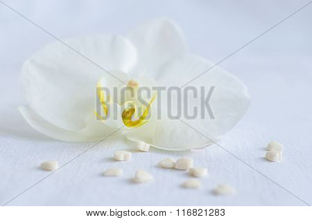 White Orchid With Small Hearts.