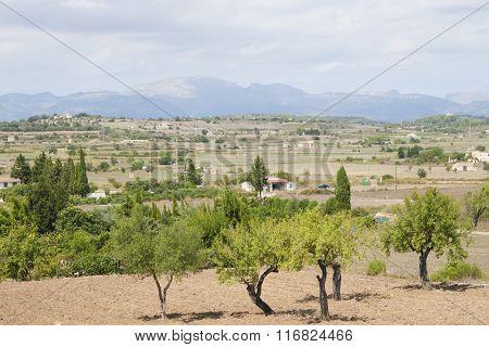 Landscape of Majorca