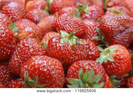 Fresh Strawberries. Selective Focus