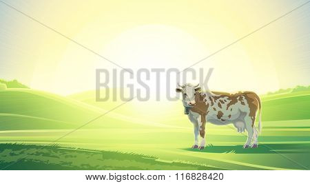 Rural summer landscape with cow. Sunrise morning.