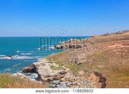 birds flying over littoral