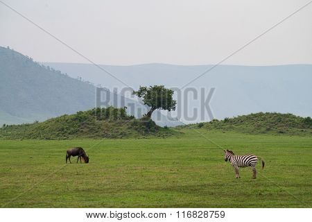 Savannah Landscape In Ngorongoro