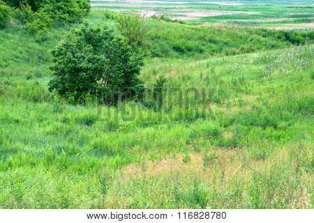 Landscape With Steppe And River