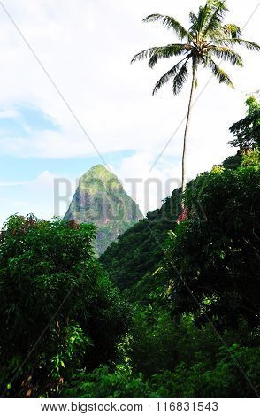Piton Petite Through The Forest