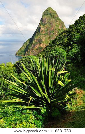 Plants Over Piton