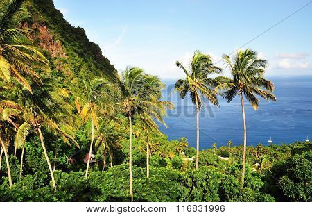 Mountain And Palm Trees