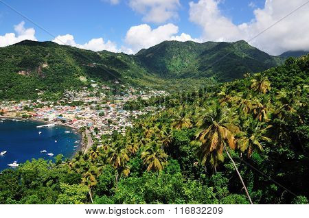 Palm Trees By Soufriere