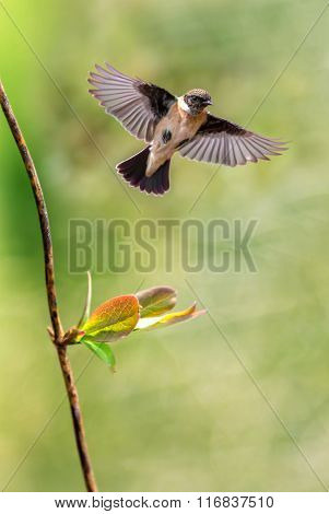 Bird In Flight Against Spring Background