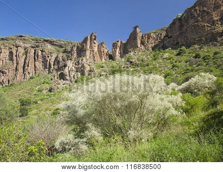 Gran Canaria, Caldera De Bandama, Retama