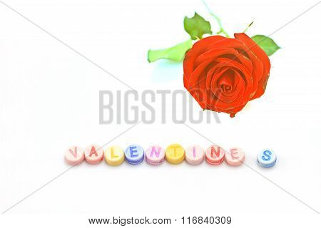Rose With Dice On White Background