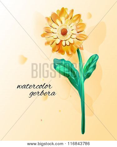 Gerbera flowers made in watercolor.