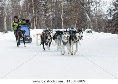 Kamchatka Dog Sled Racing Beringia. Russian Far East, Kamchatsky Krai
