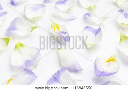 White and purple petals on white from side