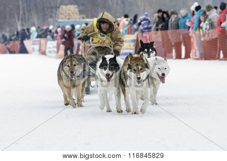 Kamchatka Dog Sledge Race Beringia. Russia, Far East, Kamchatsky Krai