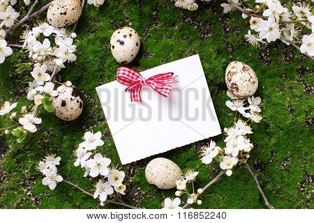 Eggs, Spring Flowering Tree Branches And Empty Tag