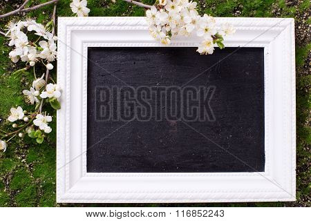 Background With White  Spring Flowering Branches Of Trees  And Empty Blackboard