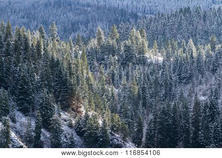 The Woods In Idaho
