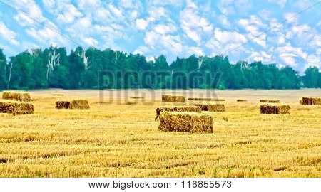 Bales of straw rectangular and trees