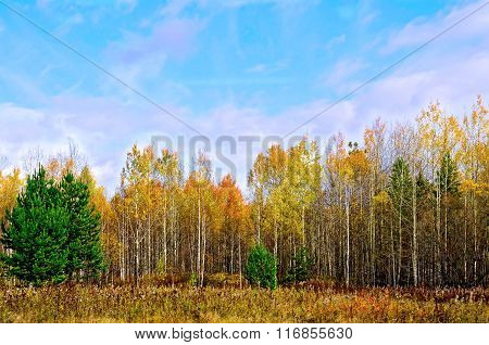 Forest autumn and blue sky