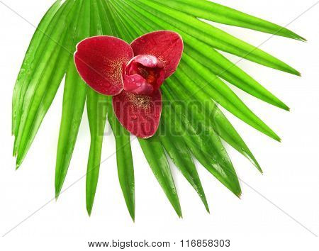 Orchid flower and palm leaves, isolated on white