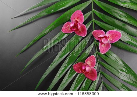 Beautiful composition of purple orchid on palm leaves, close up