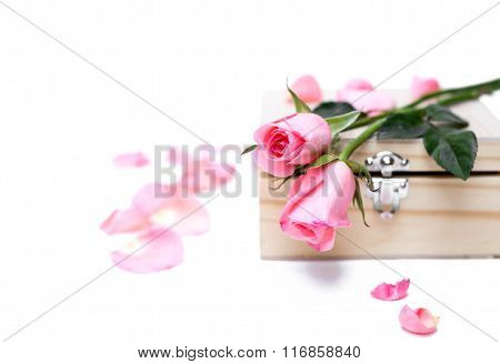 Pink Roses On Wooden  Box In Isolated Selective Focus