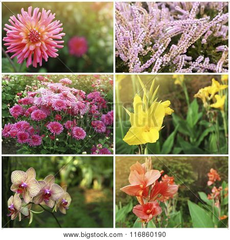 Collage with beautiful flowers in the garden.