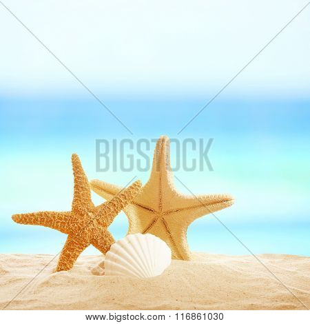 Starfishes and shells on sandy beach
