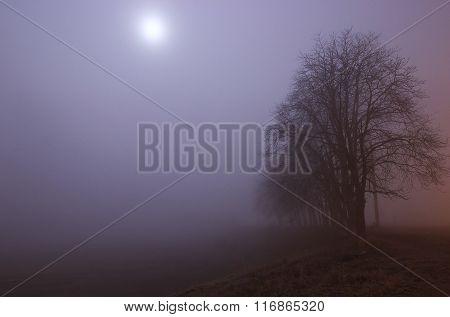 Wastelands At Velvet Fog