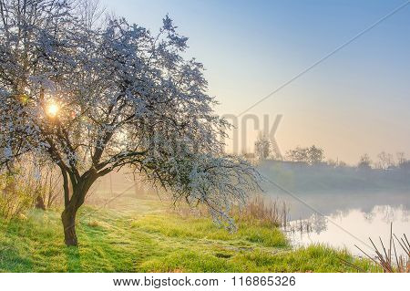 Spring Nature Apple Tree At Sun