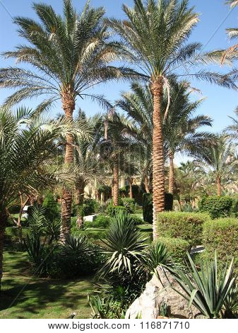 An oasis of palm trees and greenery